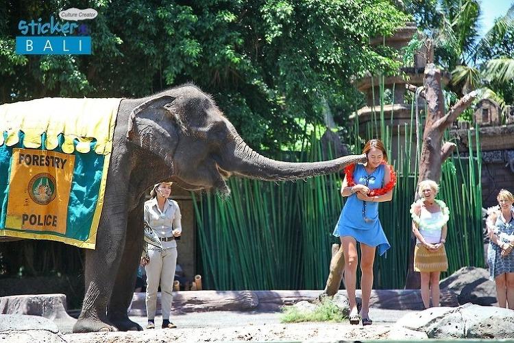코끼리의 은밀한 스킨십! 뽀.뽀.해 주쎄용~!