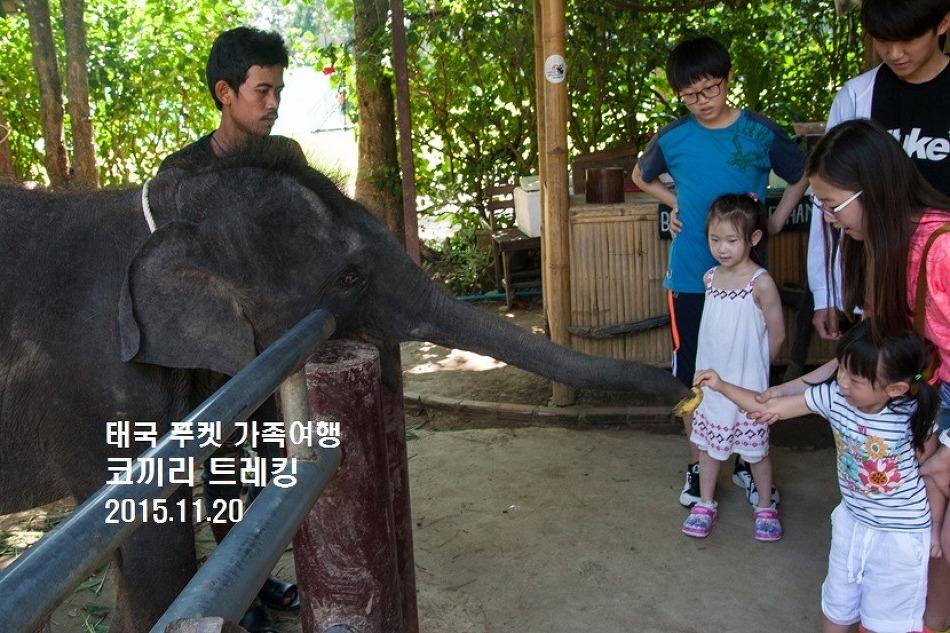 [태국-푸켓 여행] 마음이 편치 않았던 코끼리 트레킹