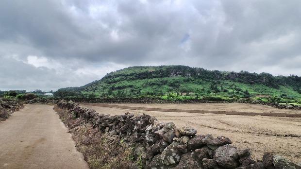 밭의 풍경
