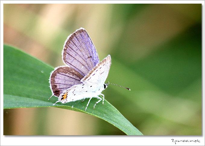 나비 사진