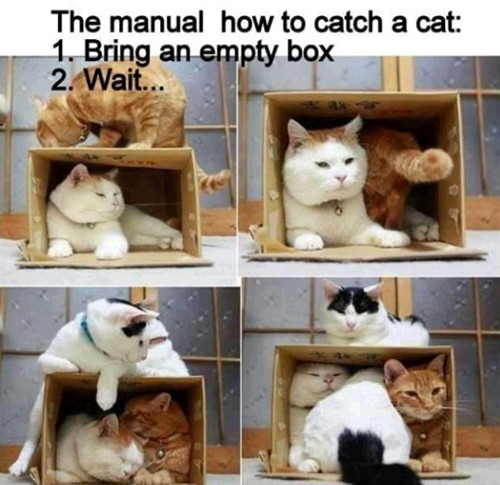 고양이를 잡는 방법