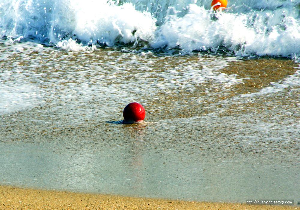 바닷가의 과일