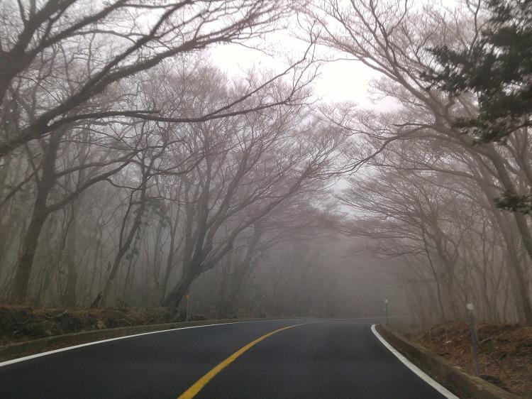 안개 낀 516 숲터널