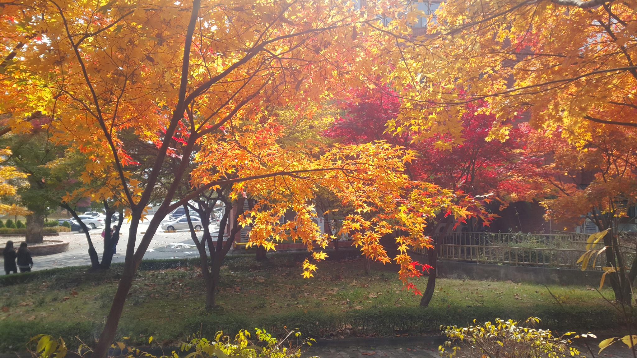 사진으로 보는 가을 그리고 빛 풍경!