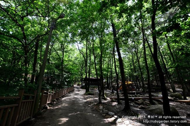 경주 여행 / 트레킹 코스 / 토함산 자연휴양림 / 맑고 깨끗한 자연과의 조우