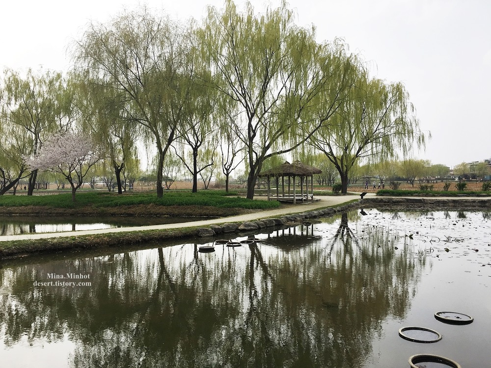 부여 궁남지 - 연꽃피는 여름에 다시 오고싶은곳 (부여 여행, 부여 가볼만한곳, 국내여행지)