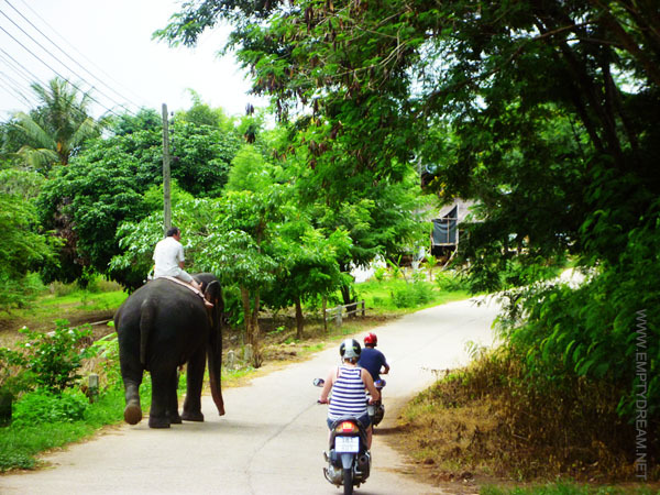태국의 흔한 시골길. 코끼리는 정말 아무렇지 않게 사람들과 함께 생활하고 있다