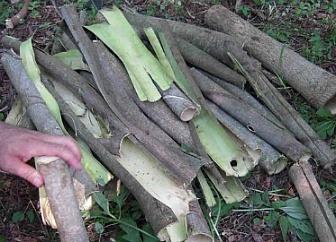 예덕나무 껍질 효능과 부작용 - 복용법, 달인물 만들기