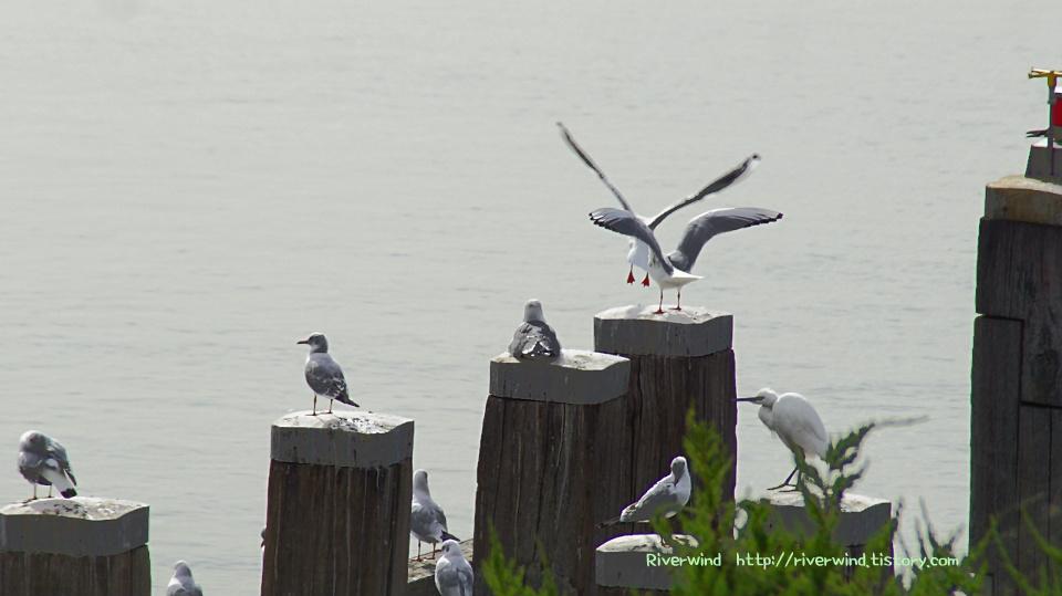 아침바다 갈매기 Morning sea's seagull