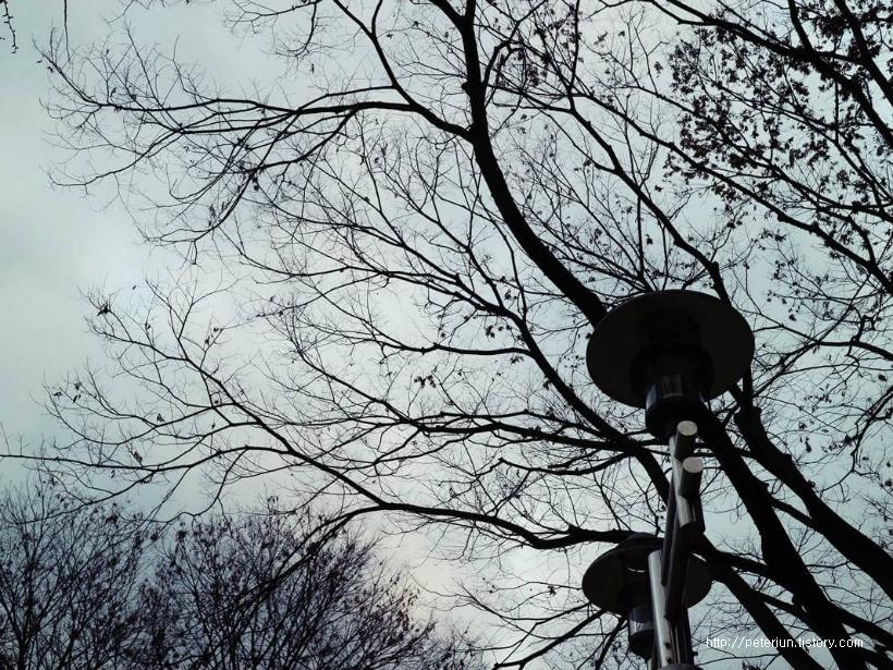앙상한 나뭇가지