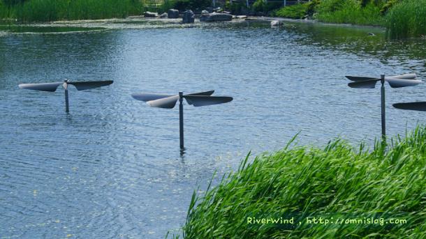 연지공원(蓮池公園) 물잠자리