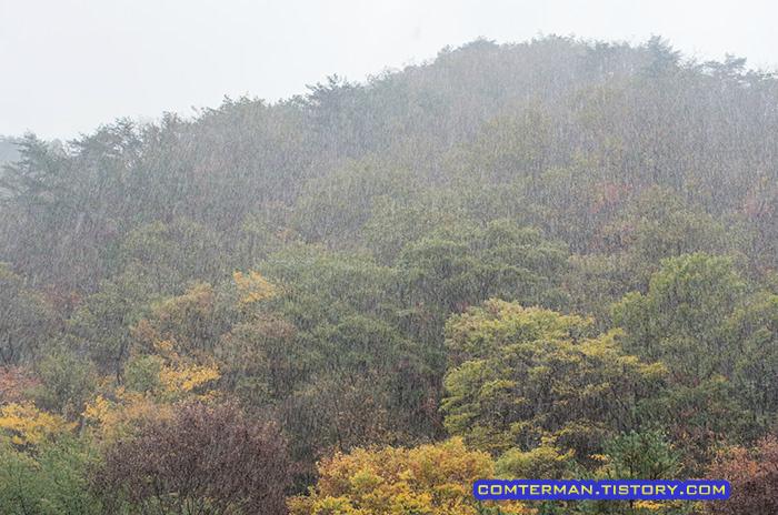 금산산림문화타운 남이자연휴양림 캠핑장