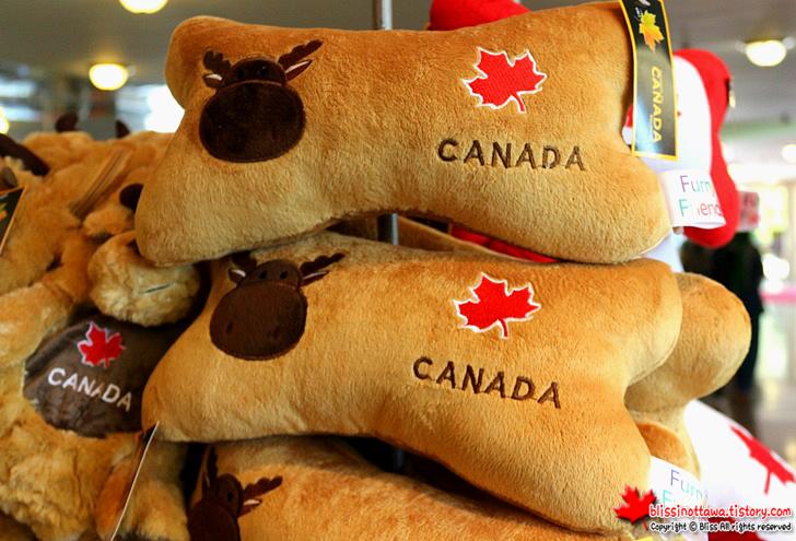 한국 귀국시 캐나다에서 꼭 사야 할 기념품  무스 비버