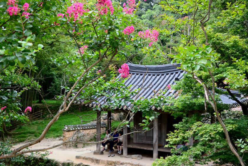 담양 소쇄원, 대나무 숲을 지나 배롱나무꽃 그늘에서의 휴식