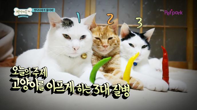 고양이를 아프게 하는 3대 질병