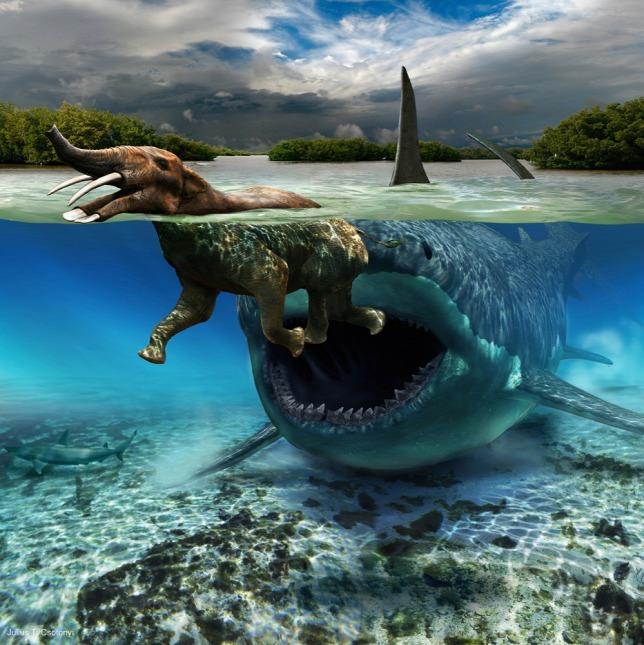 메갈로돈 Megalodon