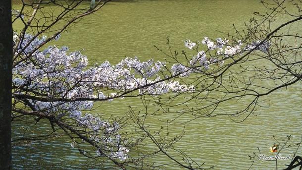 성지곡 수원지의 봄풍경