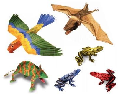 열대우림 동물 종이모형 만들기!