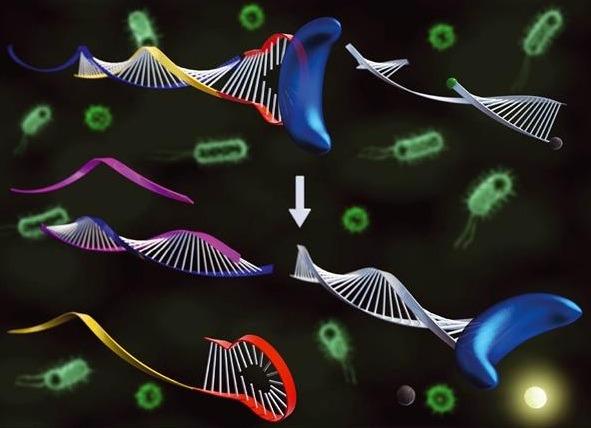 표적핵산에 의한 DNA 중합효소 활성 변화를 이용해 표적 핵산을 검출한 모식도