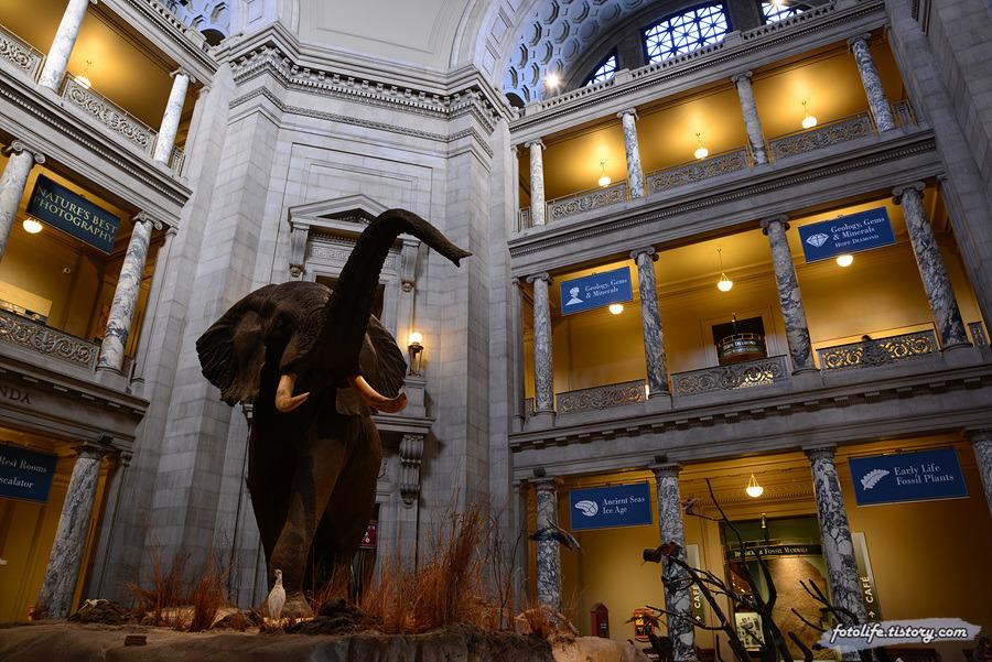 [미국/워싱턴DC] 스미스소니언 국립자연사박물관 (National Museum of Natural History)