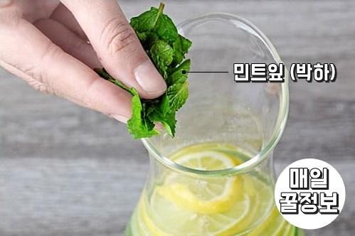 민트잎 박하 비타민