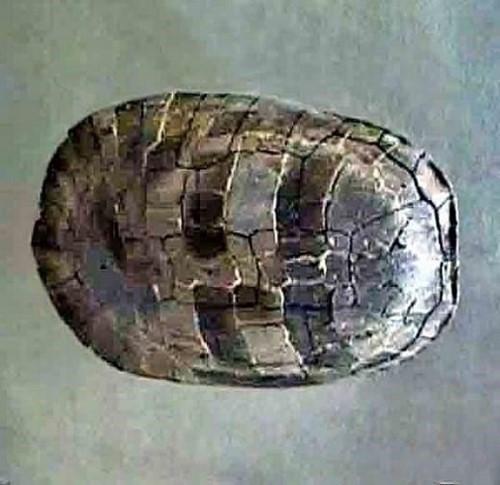 9000만 년 전 거북화석