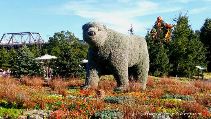 매니토바 주 북극곰입니다
