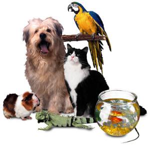 다양한 애완동물