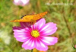 꽃과 나비-동영상