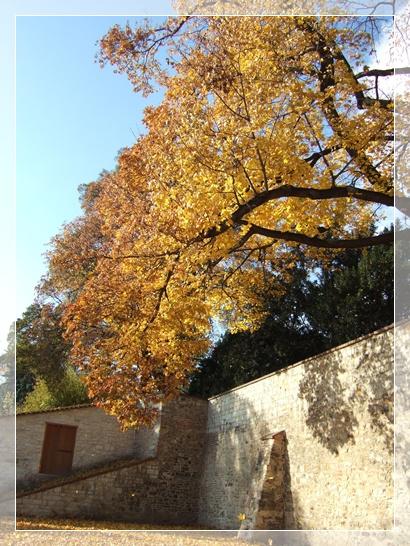 프라하 왕실 정원 단풍