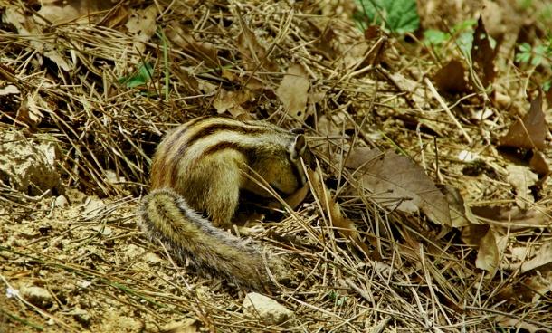 먹이 찾는 다람쥐