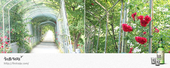 장미꽃 터널