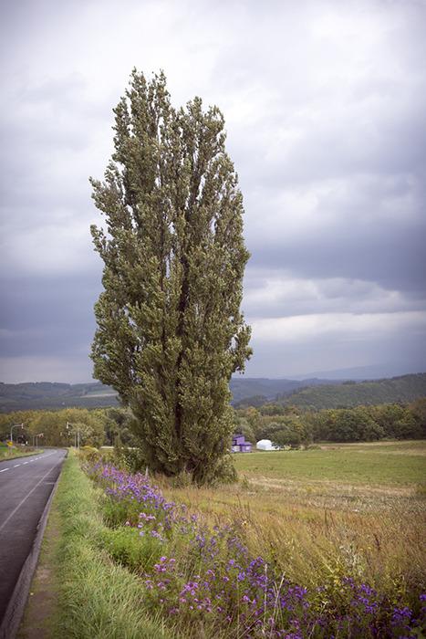 일본 홋카이도 비에이의 켄과 메리의 나무