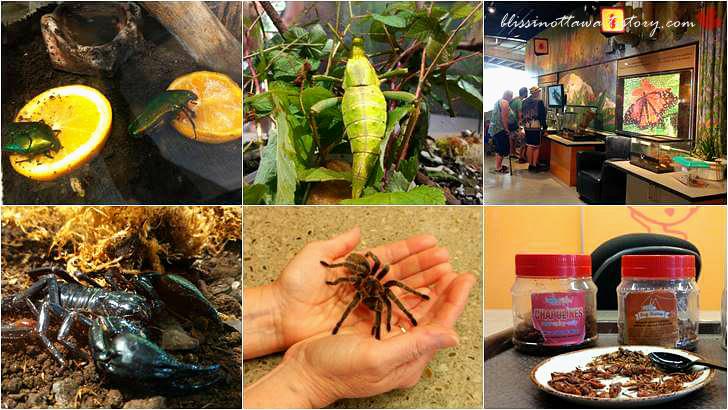 미래 대체 식량 곤충입니다