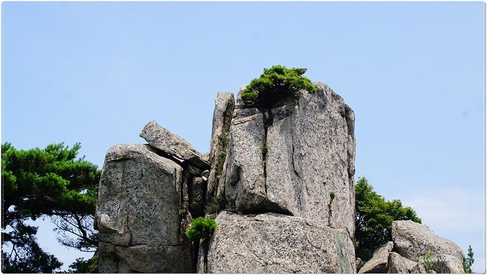 바위틈에 자라는 소나무