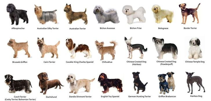 What Dog Breed Should You Get Personality Type Quiz