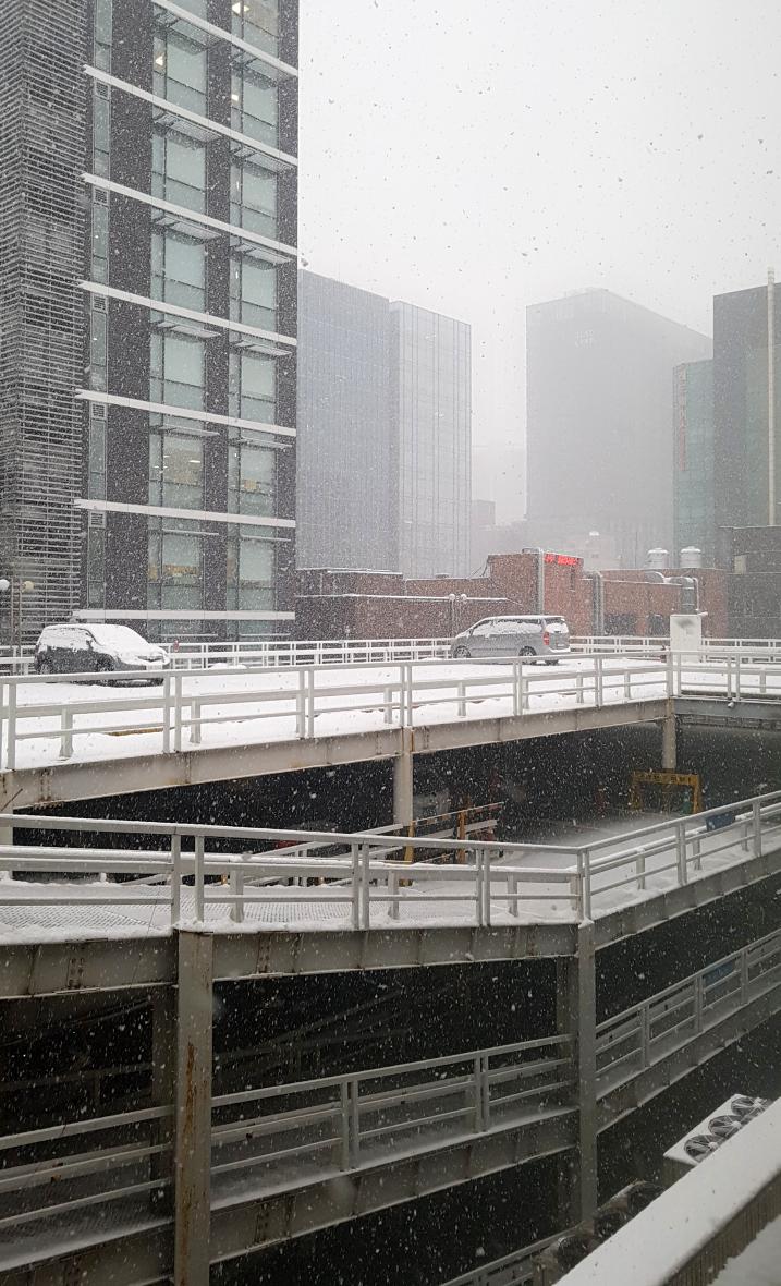 그림같이 내리는 눈 - 이번 겨울은 춥고 눈이 많이 내릴 모양이다.