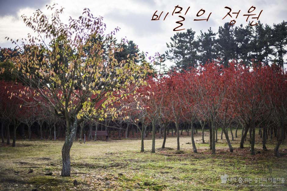 늦가을 최고의 인생샷 포인트, 항몽유적지 비밀의 정원