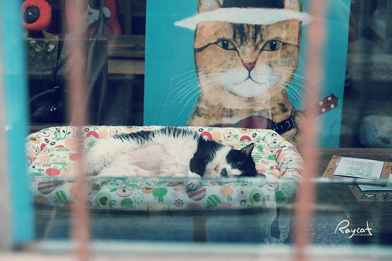허우통 고양이 마을 카페 잠든 고양이