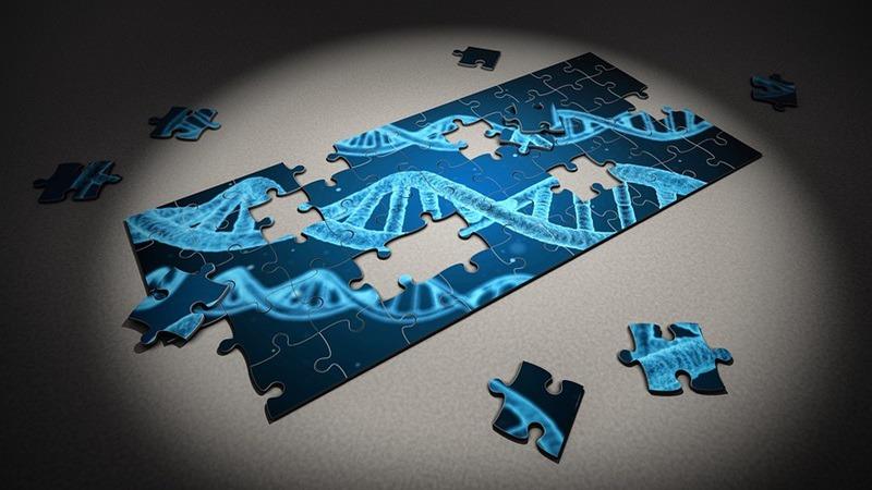 사진: 세포는 복제되고 그때마다 두 가닥의 DNA가 조합되어 태어난다.