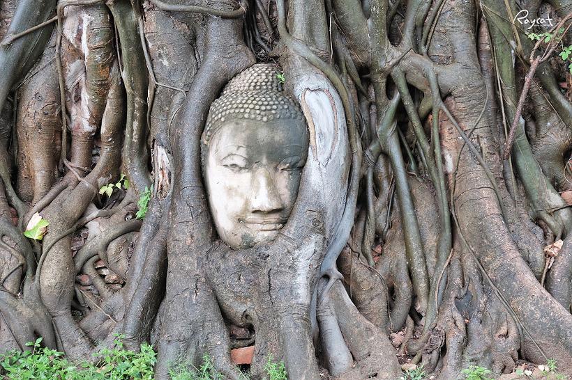 태국 고대도시 아유타야 자유여행 뚝뚝이투어