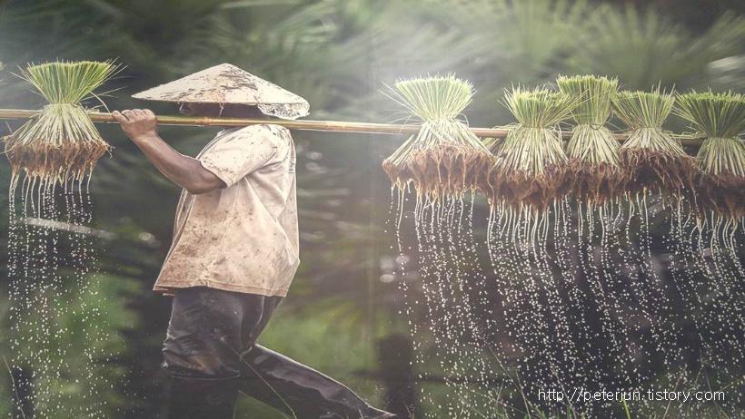 베트남 풍경