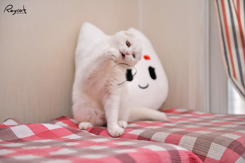 끈하나만 줘도 고양이는 세상을 다 가진듯 신나하지