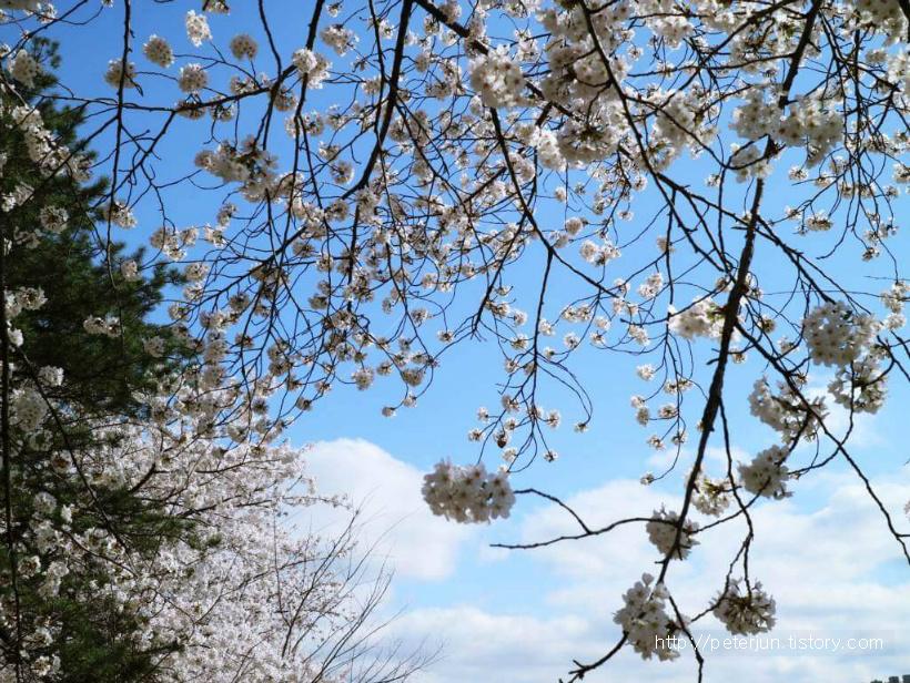 푸른 하늘과 봄꽃