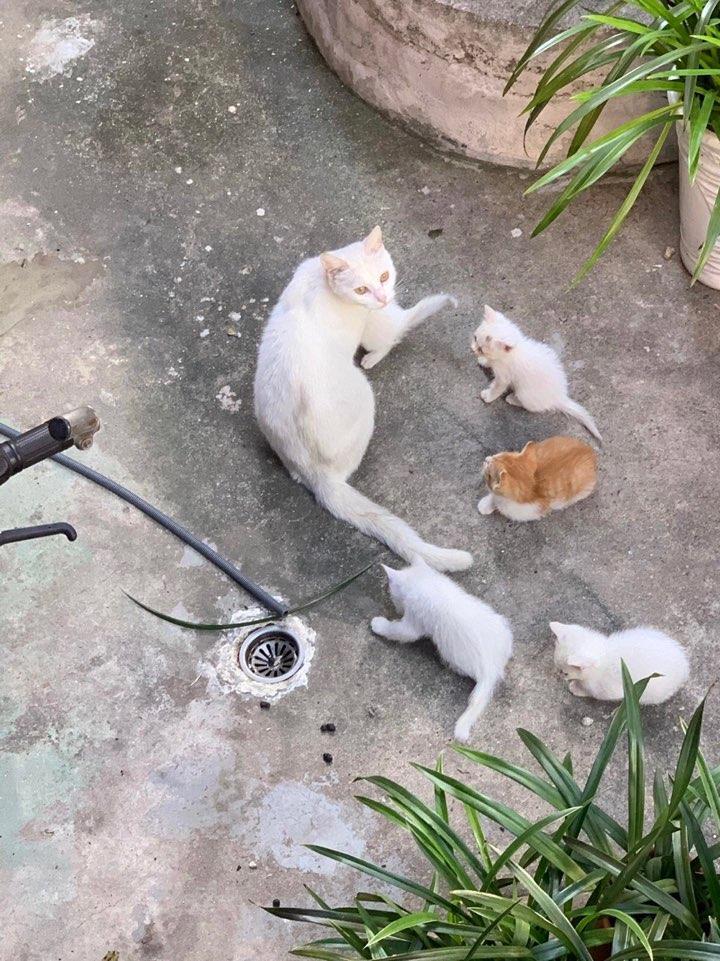 귀여운 고양이들 보고가세요